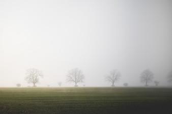 Orizzonte Mistful e gli alberi