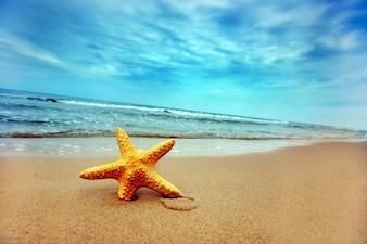 Paesaggio calmo della spiaggia con le stelle marine