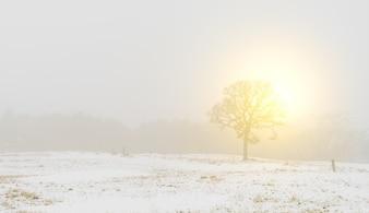 Paesaggio invernale alberi sulla neve