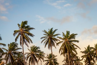 Palme e Sky