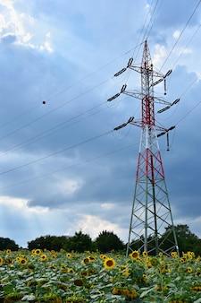 Palo di alimentazione - piloni (elettrici) nel campo del girasole