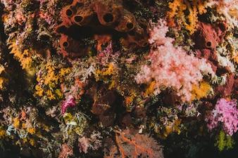 Pavimento sott'acqua con coralli
