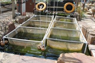Pesce vivaio