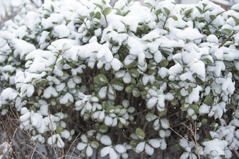 Pianta con foglie coperte di gelo mattutino. Foto scattata nel tardo autunno.