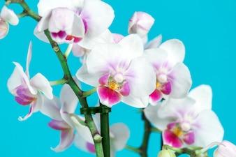 Primo piano di orchidee decorative