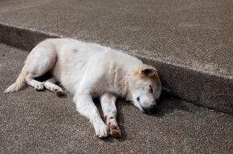 Primo piano di soggiorno di cane su pavimento macinato pietra lavata