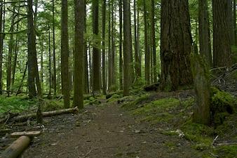foresta pluviale foto e vettori gratis