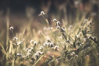 Priorità bassa di natale dell'annata. Close up colpo di fiore selvatico in campo