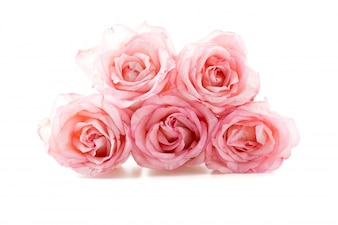 Rosa e rosa bianca