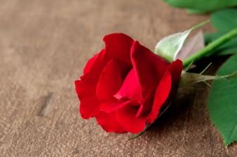 Rosa rossa sul pavimento di legno
