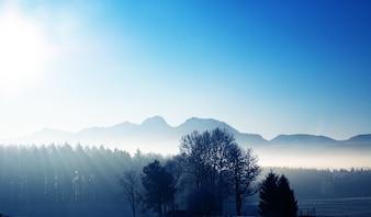 Silhouette di alberi al sorgere del sole