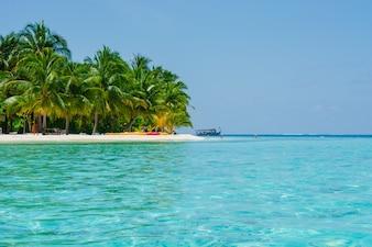 Sole di giorno di palme da cocco caraibi