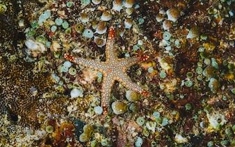 Stelle marine nel pavimento dell'oceano