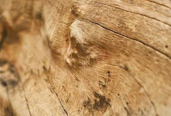 Struttura e priorità bassa dell'albero