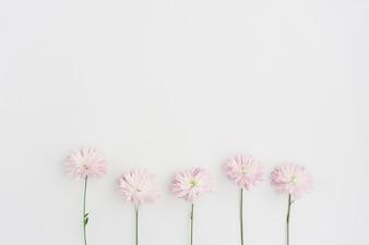 Superficie bianca con cinque fiori in fila