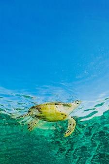 Tartaruga che galleggia sulla superficie dell'acqua blu dell'oceano