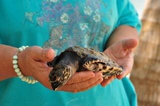 Le tartarughe foto e vettori gratis for Tartarughe in amore