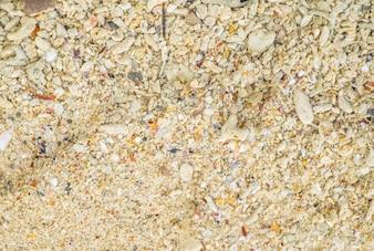 Texture di fondo della spiaggia di corallo