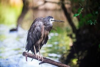 Uccello nativo della foresta nazionale nessuno