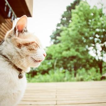 Un gatto con effetto filtro retrò
