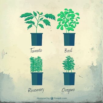 Varietà di erbe