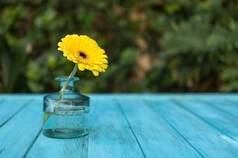 Vaso di vetro decorativo con Margherita gialla all'aperto