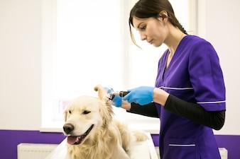 Veterinario veterinario salute sanitaria