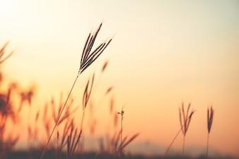 Vintage fiore selvatico nel tramonto, retro stile instagram effetti di filtro