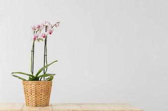 Wicker vaso di fiori con le orchidee
