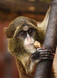 olhos de animais Cara bonito áfrica marrom grande pele