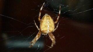 teia de aranha animal perto