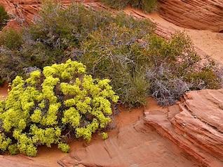 arbusto erosão natureza quente sábio escova deserto