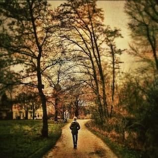 natureza árvore solidão paisagem sozinho