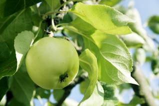 maçã verde, saudável