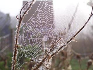 teia de aranha, aranha