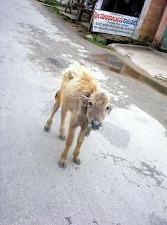 buffello jovens