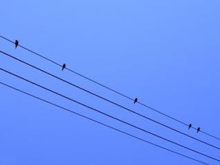 pássaros em um fio, fio
