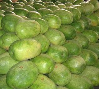melancias enormes