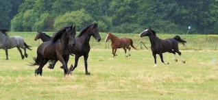 cavalos na Holanda, celeiro