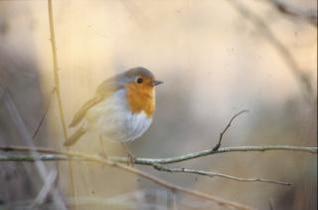 pássaro com bau de laranja