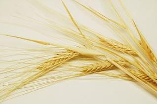 de grãos, alimentos