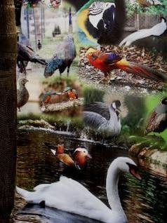 meus pássaros