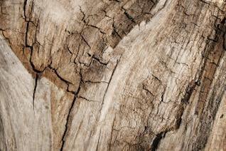 grungy de madeira rachada