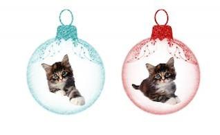 Gatinhos do Natal