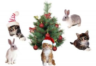 Natal animais de estimação
