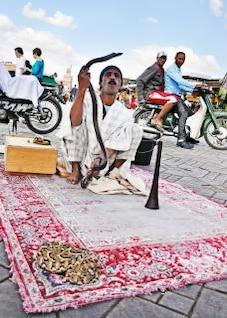 Snake Charmer rua