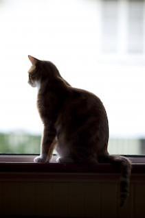 gato silohuette