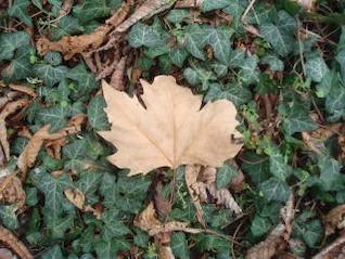 natureza chão da floresta