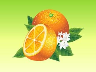 Elemento do vetor realista laranjas