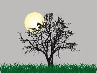 Árvore só na luz do luar